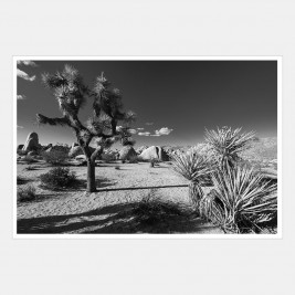 Joshua Tree National Park, California | 1 of 2