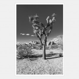Joshua Tree National Park, California | 2 of 2