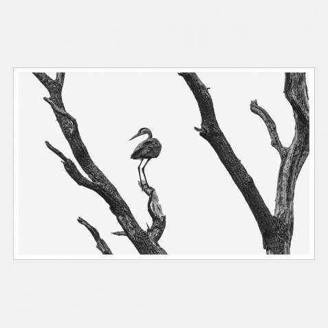 A heron perched on the branches of a dead tree