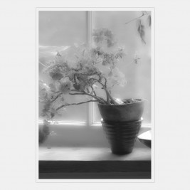 A potted flowering plant on a window sill